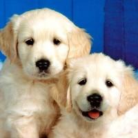 2-Cute-Dogs