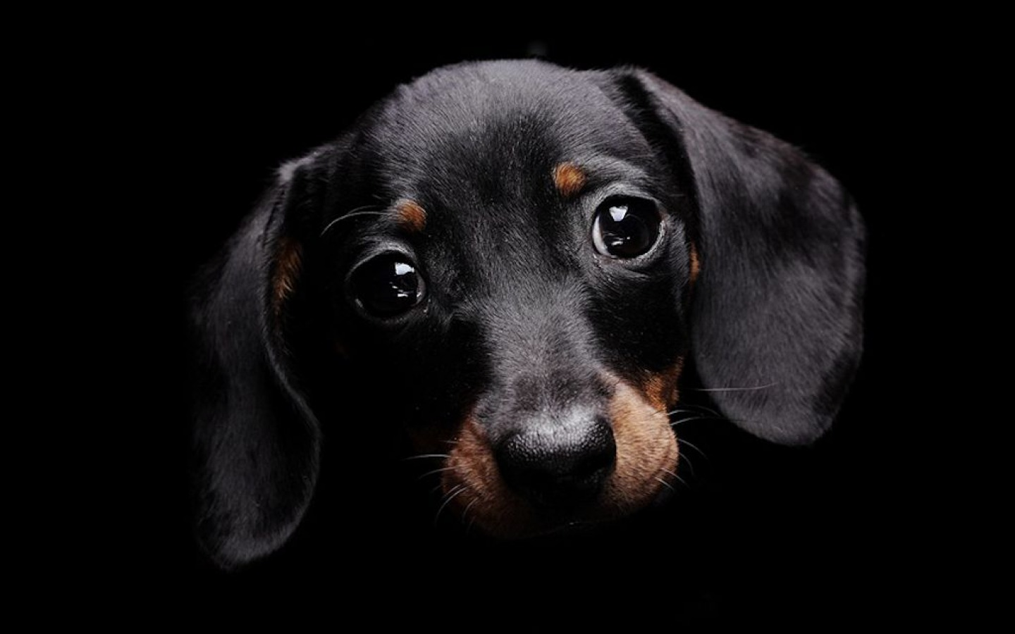 Good Sad Black Adorable Dog - Cute-Black-Dog  HD_555989  .jpg