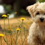 Cute dog brown