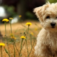 Cute-Dog-Brown