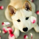 Cute dog faces