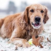 Cute-Dog-In-Snow
