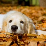 Cute dog white1