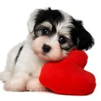 Cute-I-Love-Dog