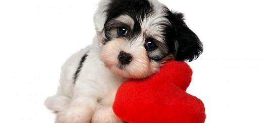 Cute i love dog