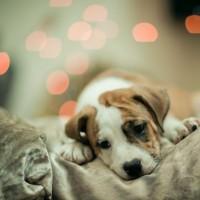 Cute-Puppy-Wallpaper