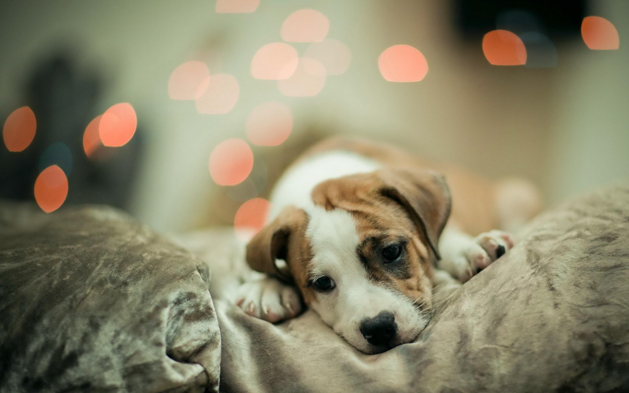 Cute Puppy Wallpaper Windows Mode