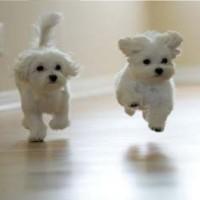 Funny-Dogs-Running