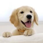 Hd dog wallpaper