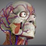 Essential Anatomy 3 For Windows 10